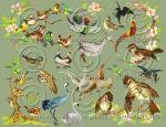 Grab Bag Miscellaneous BIRDS