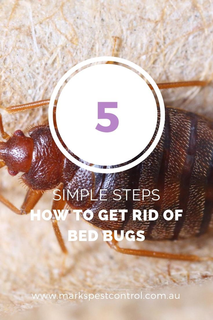 How to Get Rid of Bed Bugs 5 Simple Steps Rid of bed