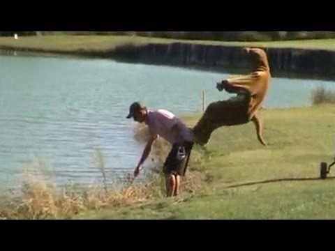 remi gaillard kangourou