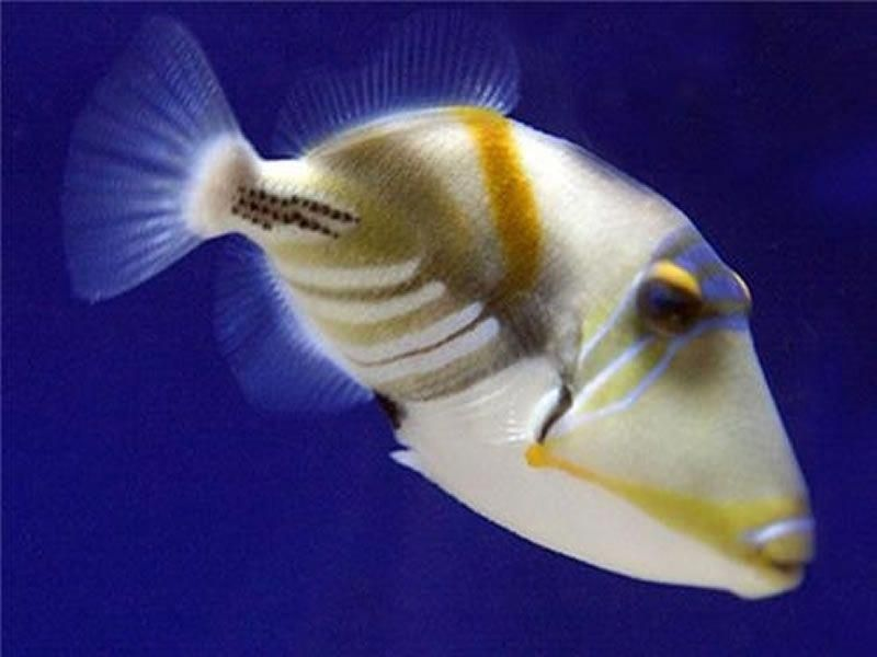 Pin On Exotic Fish