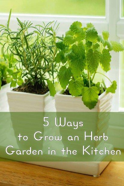 5 Ways to Grow an Herb Garden in the Kitchen