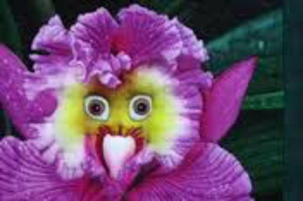 10 Sementes Orquídeas Coruja Planta Exótica Rara R 999 No