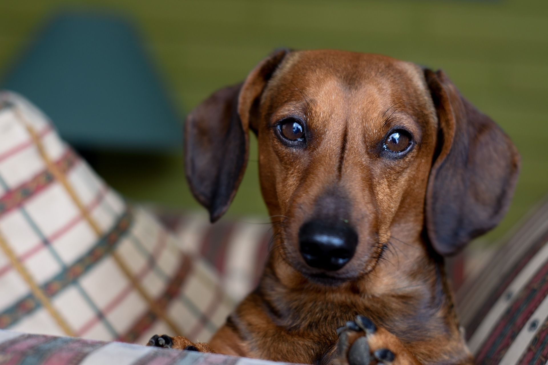 What Is The Best Dog Food For Dachshunds My 9 Top Picks Best