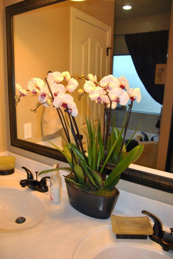 Gr npflanzen in der kleinen wohnung richtig platzieren problemlose zimmerpflanzen pflanzen - Dekoration mit orchideen ...