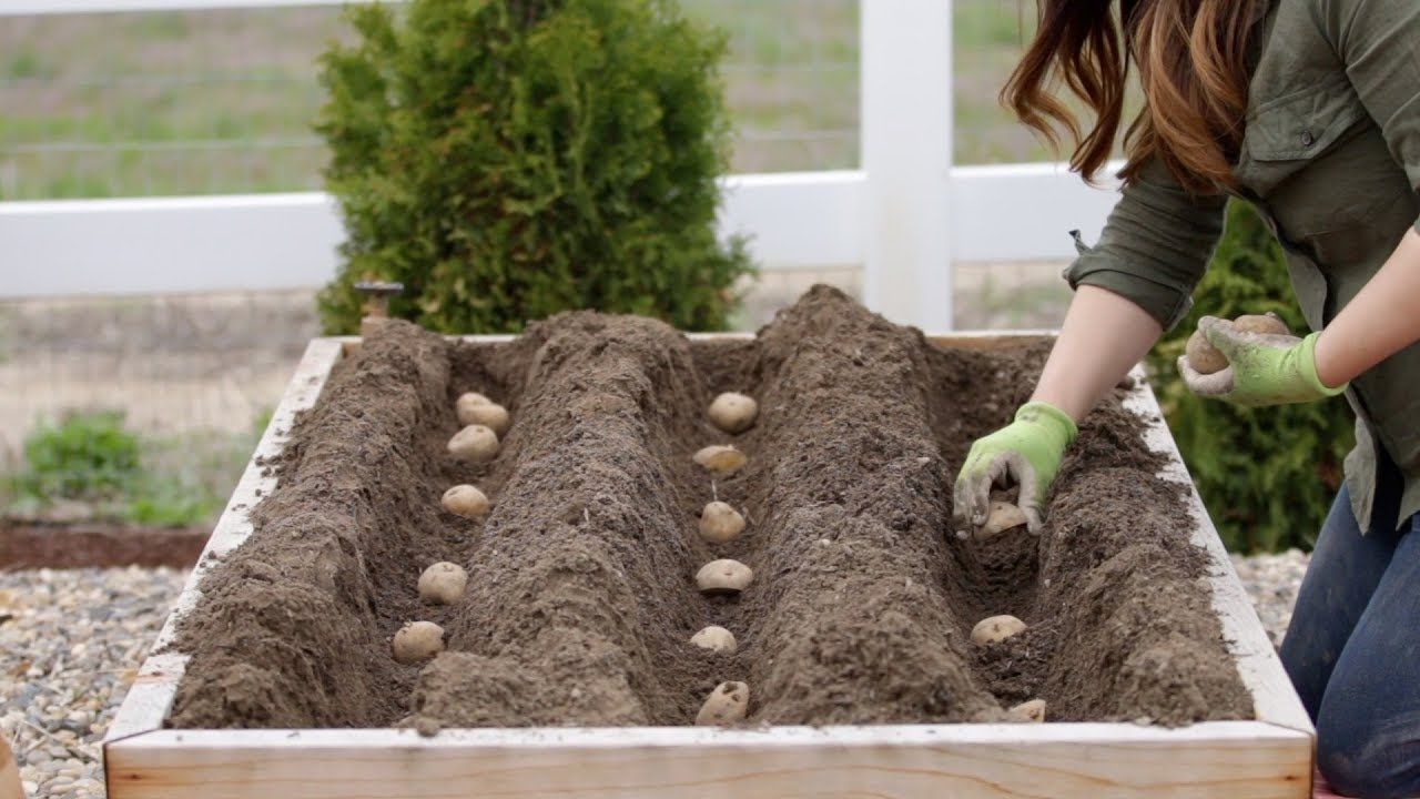 How to Plant Potatoes! 🥔🌿 // Garden Answer YouTube (With