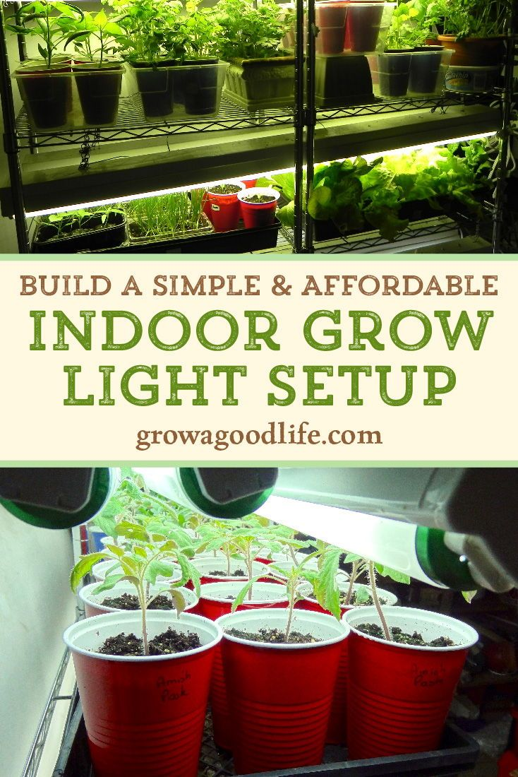 Build a Simple and Affordable Indoor Grow Light Setup
