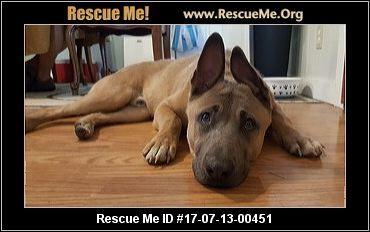Texas Belgian Malinois Rescue Adoptions Rescueme Org