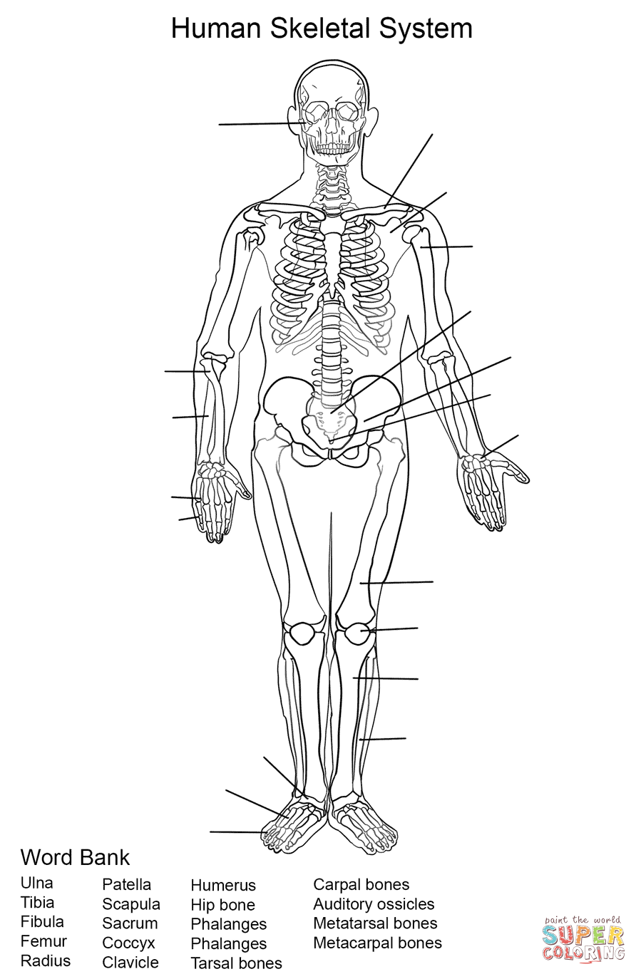 Worksheets Human Skeleton Worksheet image result for human skeletal system anatomy pinterest worksheet coloring page from category