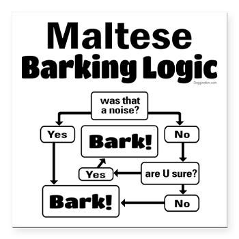 Maltese Barking Logic On Www Doggination Com Rat Terriers