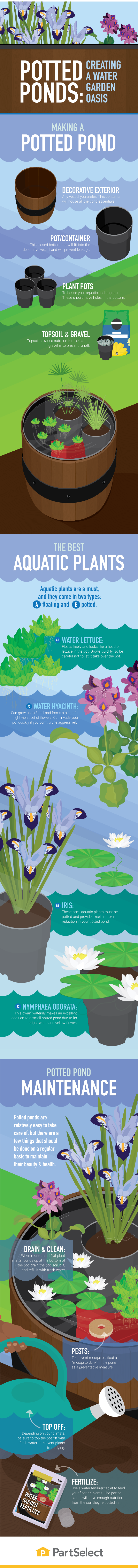 Potted Ponds: Creating a Water Garden Oasis