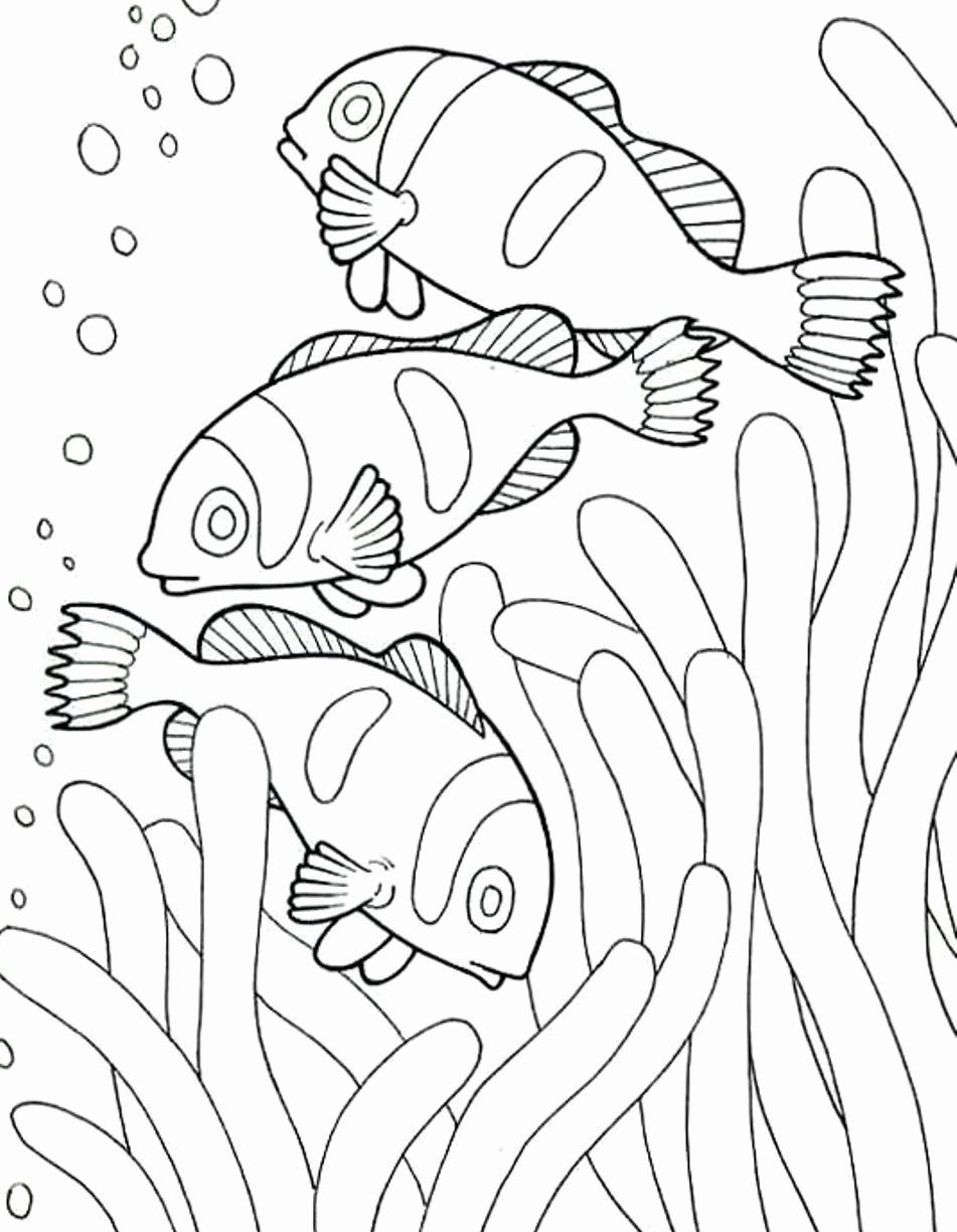 Ocean Habitat Coloring Pages Inspirational Coloring Pages And