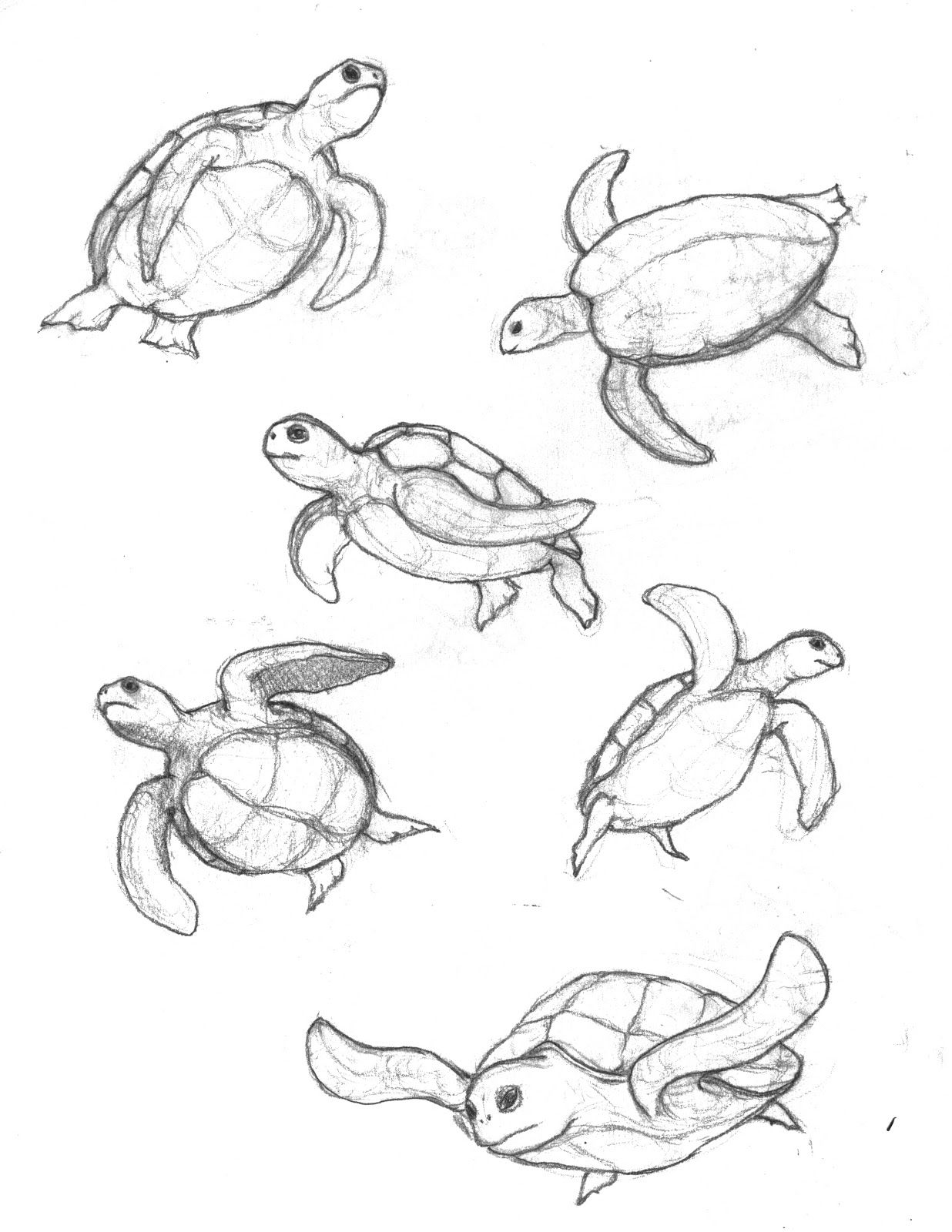 Turtle Sketch Related Simple Sea Turtle Drawing Tribal Sea Turtle