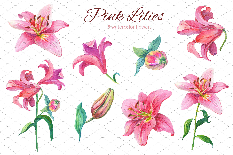 Pink Lilies Watercolor Clipart Flower Clipart Clip Art