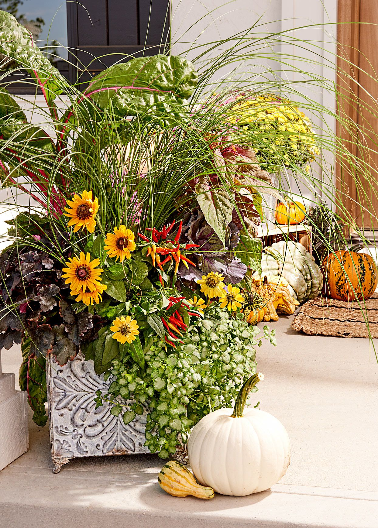 6 Tips for Creating a PicturePerfect Container Garden Every Time