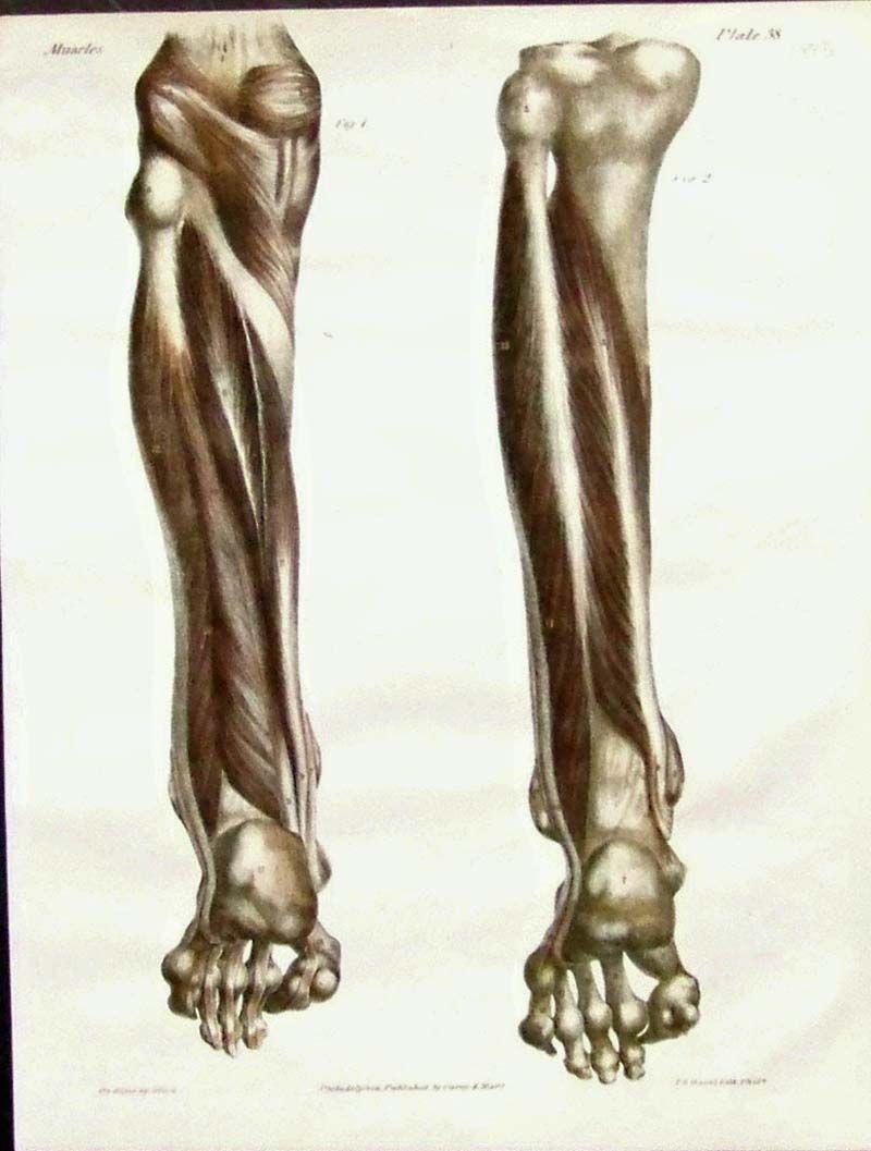 Prints Old & Rare – Medical, Surgical and Anatomy page f68f8b96e925e53c3b87bc54c79eddb5