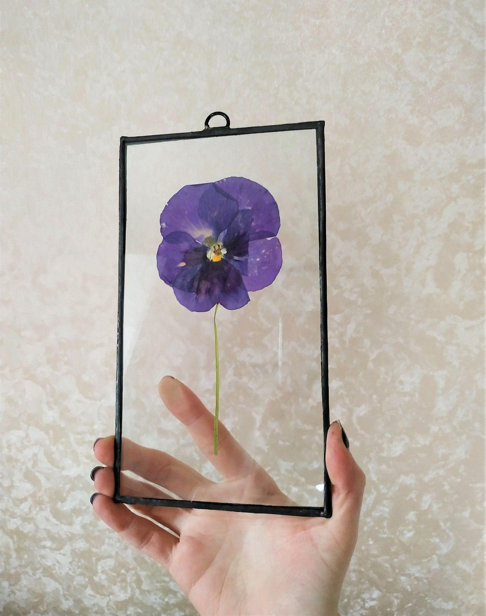 Pressed Pansy Pressed Flower Frame Decor Herbarium Art Etsy Pressed Flowers Pressed Flower Art Pansies Flowers