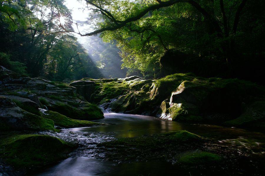 Photograph Morning Light by Junya Hasegawa on 500px