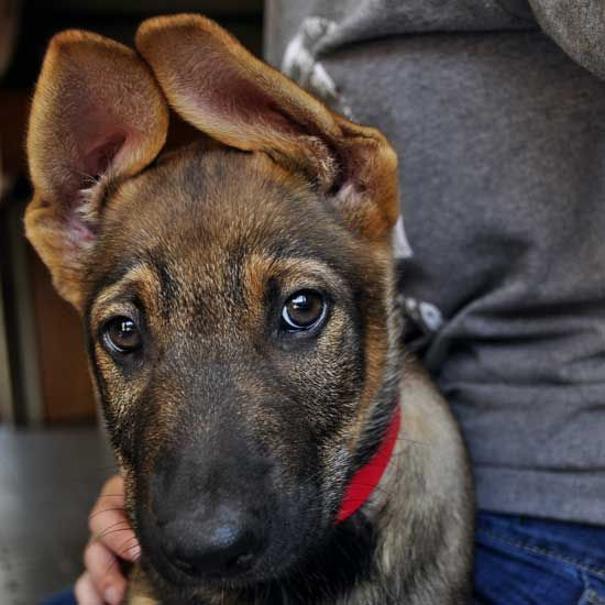 Will I Ever Grow Into My Crazy Ears Be The One To Know By