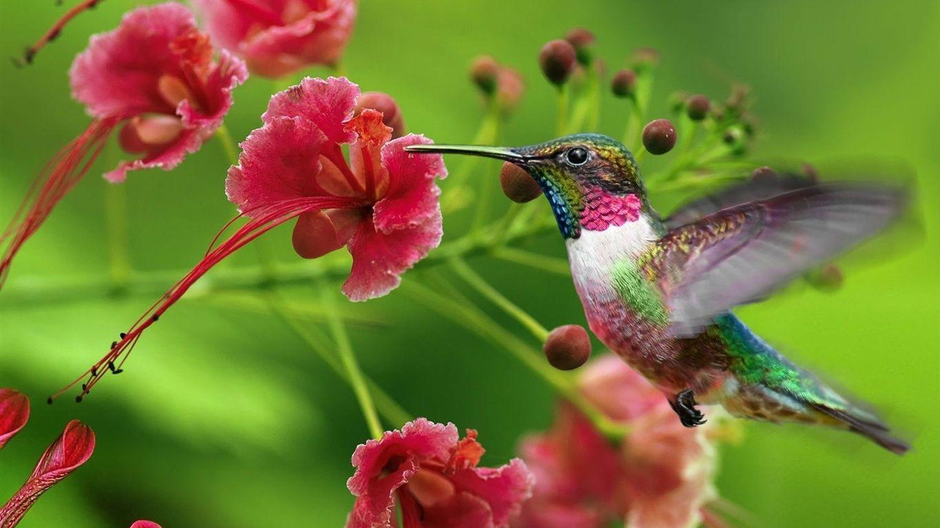 Pin By Marip Marie Pierre Dieng On Hummingbirds Delight Hummingbird Pictures Hummingbird Wallpaper Hummingbird Flowers