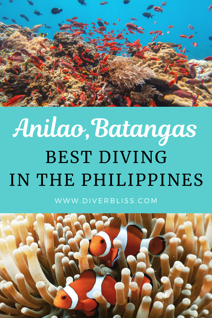 Anilao The Best Diving In Batangas Philippines In 2020 Batangas Philippines Travel Guide Scuba Diving Bucket List