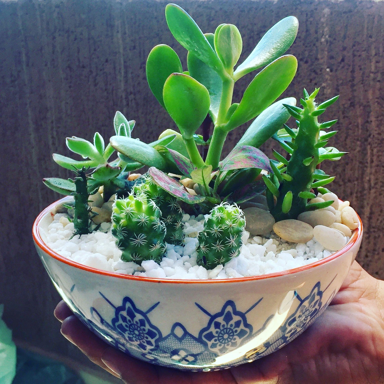 Miniterr Rio #Miniterrarium #Suculentas # Cactus