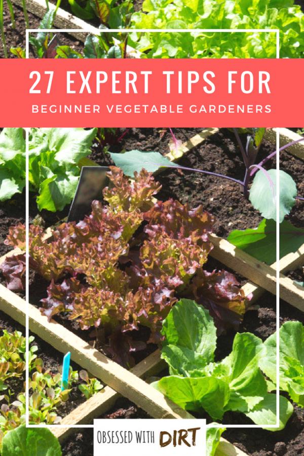 27 Tips For Beginner Vegetable Gardeners Vegetable Garden For