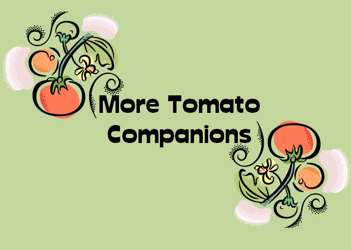 Get Your Hands Dirty: More Tomato Companion Planting Info