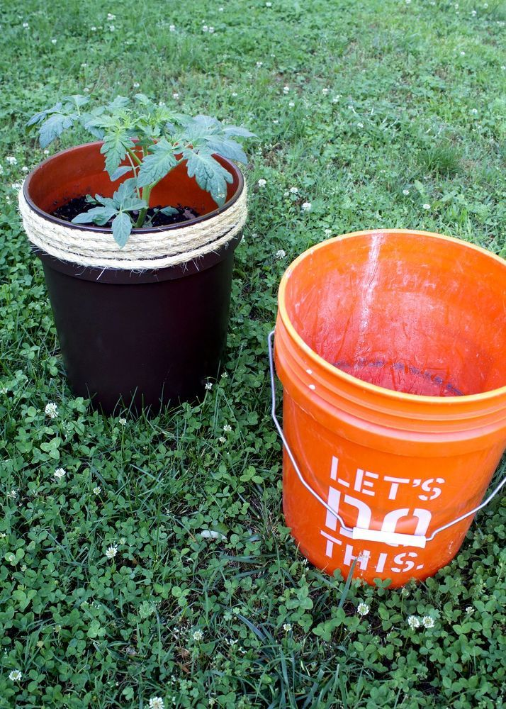 Growing Tomatoes In Five Gallon Buckets Bucket Gardening