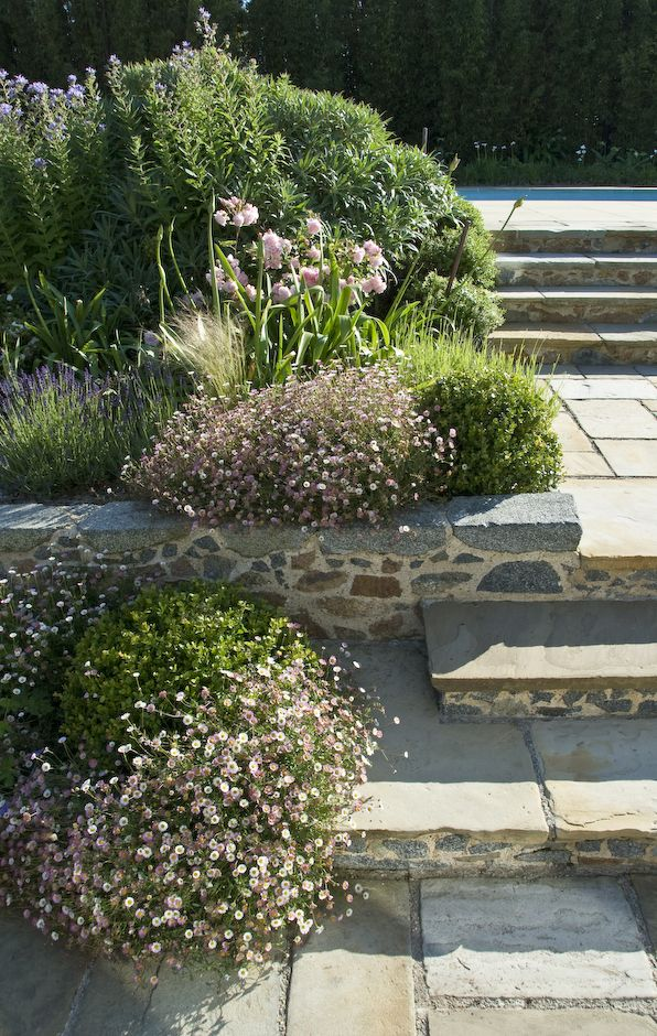 Relaxed Family Garden Design In Guernsey With Granite Steps And Walls And  Mexican Daisy Softening The Hard Landscape