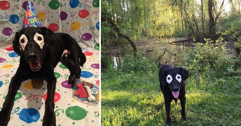 Atteint de vitiligo, ce chien au passé douloureux est aujourd'hui très heureux Rowdy est probablement le toutou le plus heureux de tout l'Oregon. Et pour cause, atteint de vitiligo et déjà passé deux fois à une patte de la mort, il savoure désormais la vie plus que quiconque…