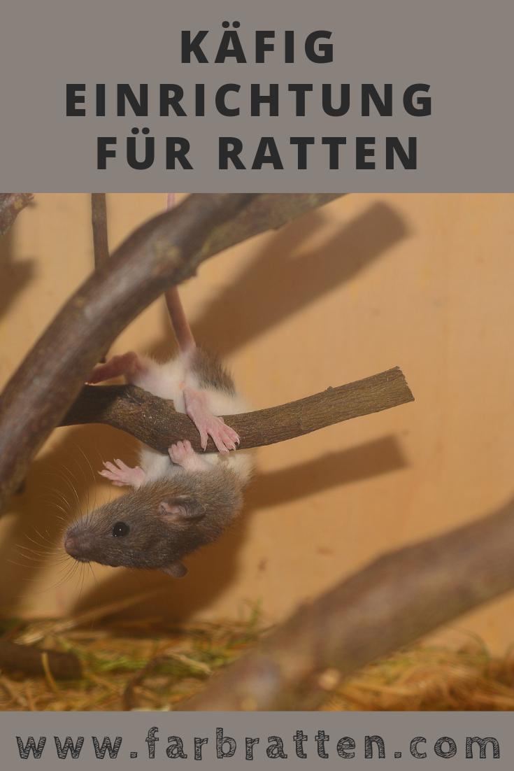 Ratten Kafig Einrichtung Kafigzubehor Fur Ratten Und Andere Nager Home Sweet Home Kafigzubehor Speziell Fur Ratten Napf Ratten Farbratten Ratte Haustier
