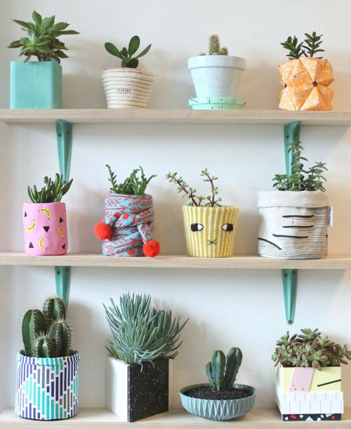 classy pictures of cactus house plants.  Pin by Alyssa on Planted Pinterest Plants Cacti and Gardens