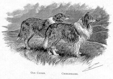 Queen Victoria Collie Dog Rough Collie Vintage Dog