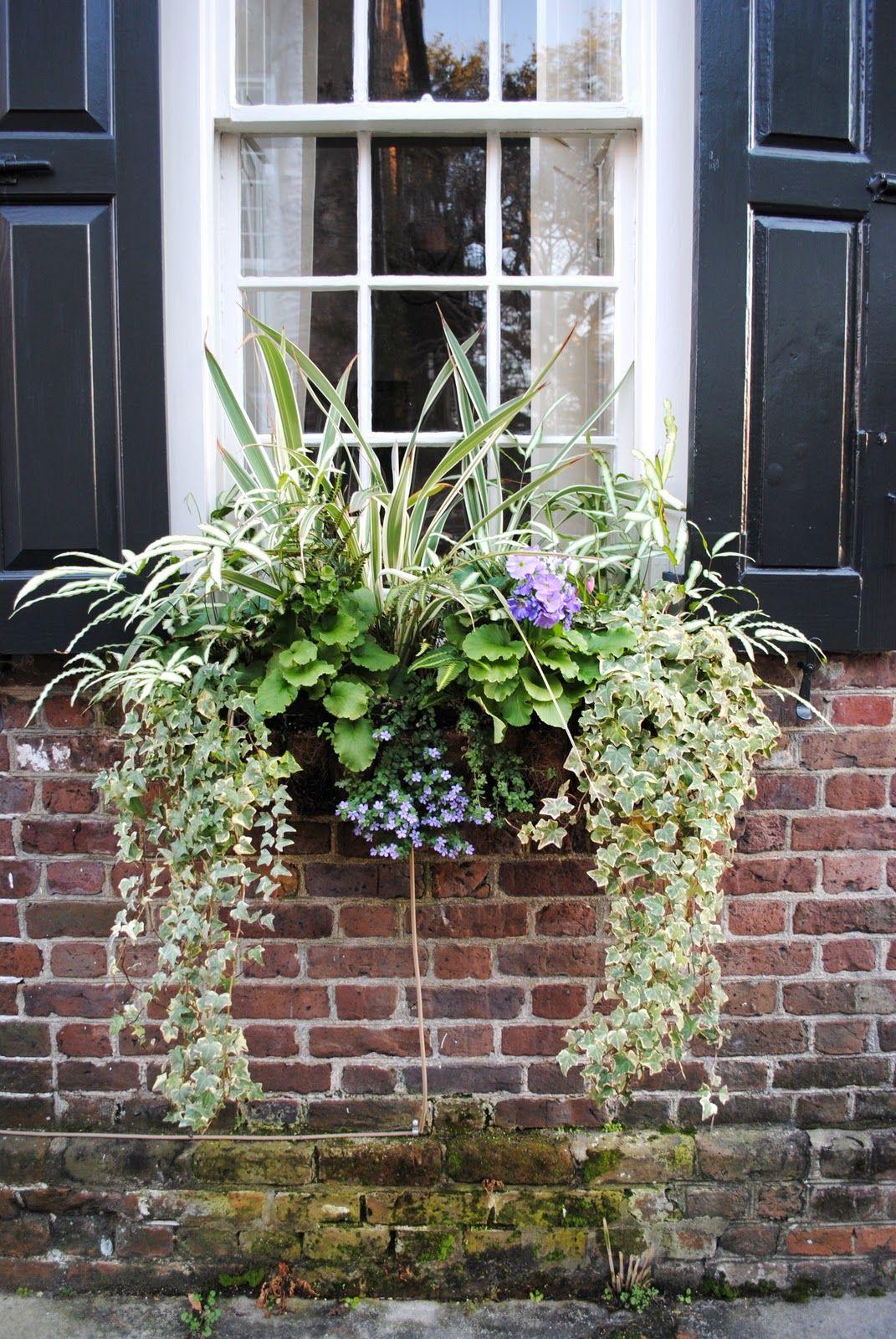 Charleston Window Boxes Window planter boxes, Fall windows