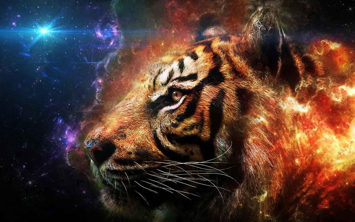 Fondos De Pantalla De Felinos: Fondos-pantalla-HD-de-animales-felinos-tigres-fantastic
