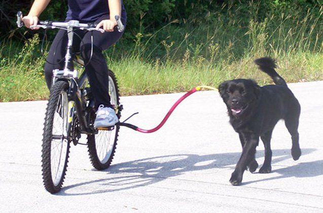 Cycle Safely With Your Dog Thanks To The Bike Tow Leash Bike