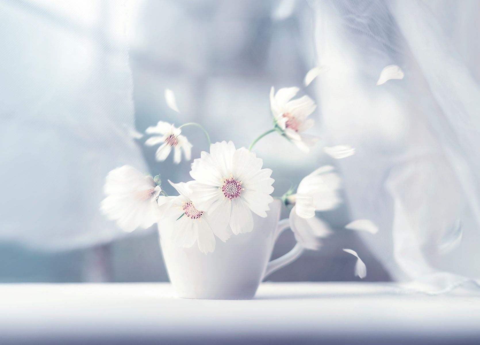 Ashraful Arefin Photography Flower Stories Flower Photography