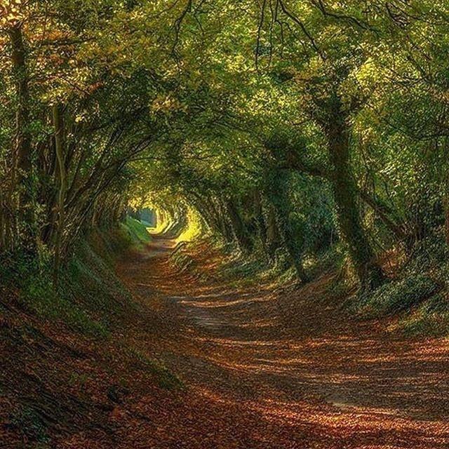 Halnaker, Sussex, UK Photo by ©Sam Moore.