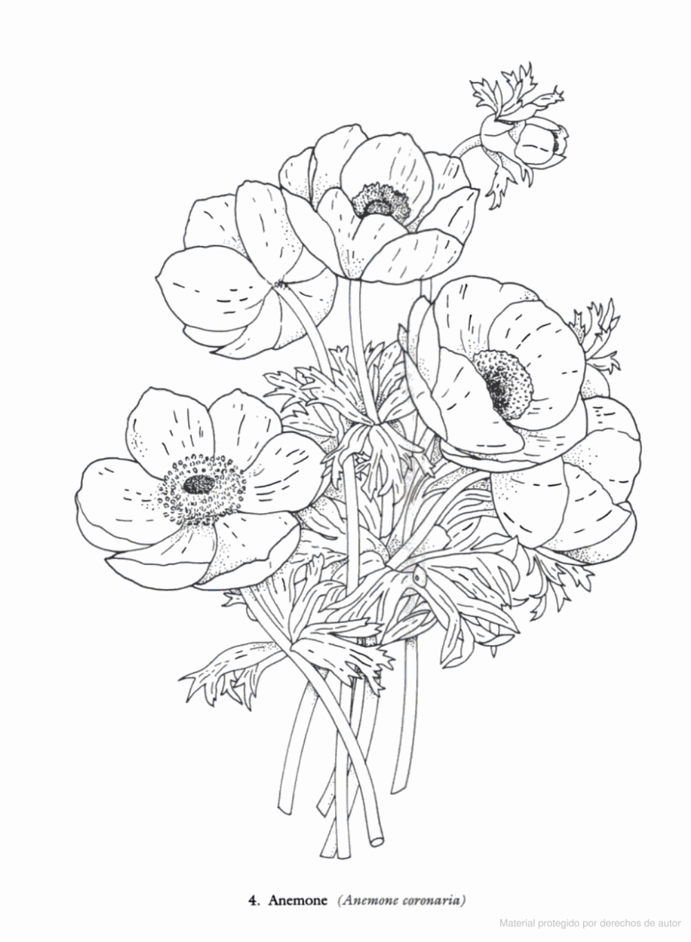 Redoute Flowers Coloring Book Charlene Tarbox Google Libros Coloring Books Flower Coloring Pages Coloring Pages For Grown Ups