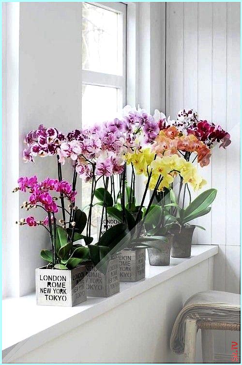 Orchideen Pflege Tipps und Wissenswertes bunte verschiedene orchideen am fenster orchideenpflege Orchideen Pflege Tipps und Wissenswertes bunte versc  Orchideen Pflege Tipps und Wissenswertes bunte verschiedene orchideen am fenster orchideenpflege Orchideen Pflege Tipps und Wissenswertes bunte versc  bloggie bloggie0416 nbsp  hellip   #Bunte #Fenster #Orchideen #orchideenpflege #pflanzen vermehren wasser #Pflege #Tipps #und #versc #verschiedene #orchideenpflege