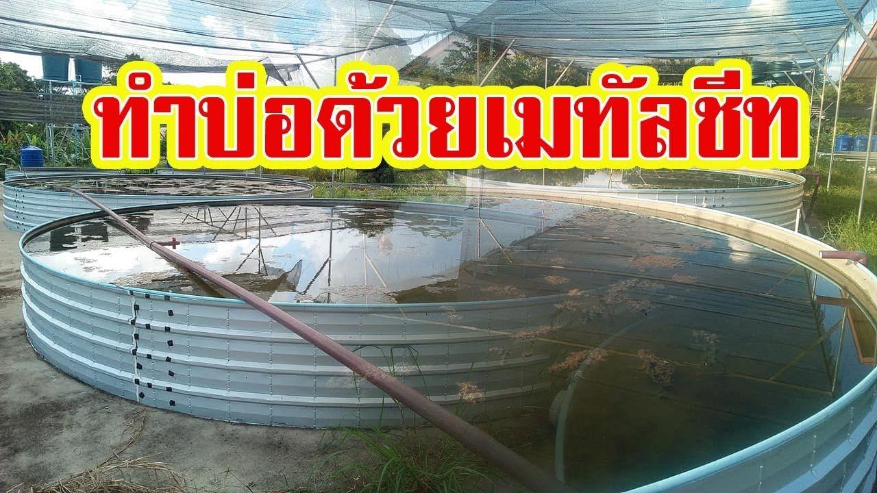 ทำบ อเล ยงปลา ก กเก บน ำ จากเมท ลช ท Youtube กบ ก ง