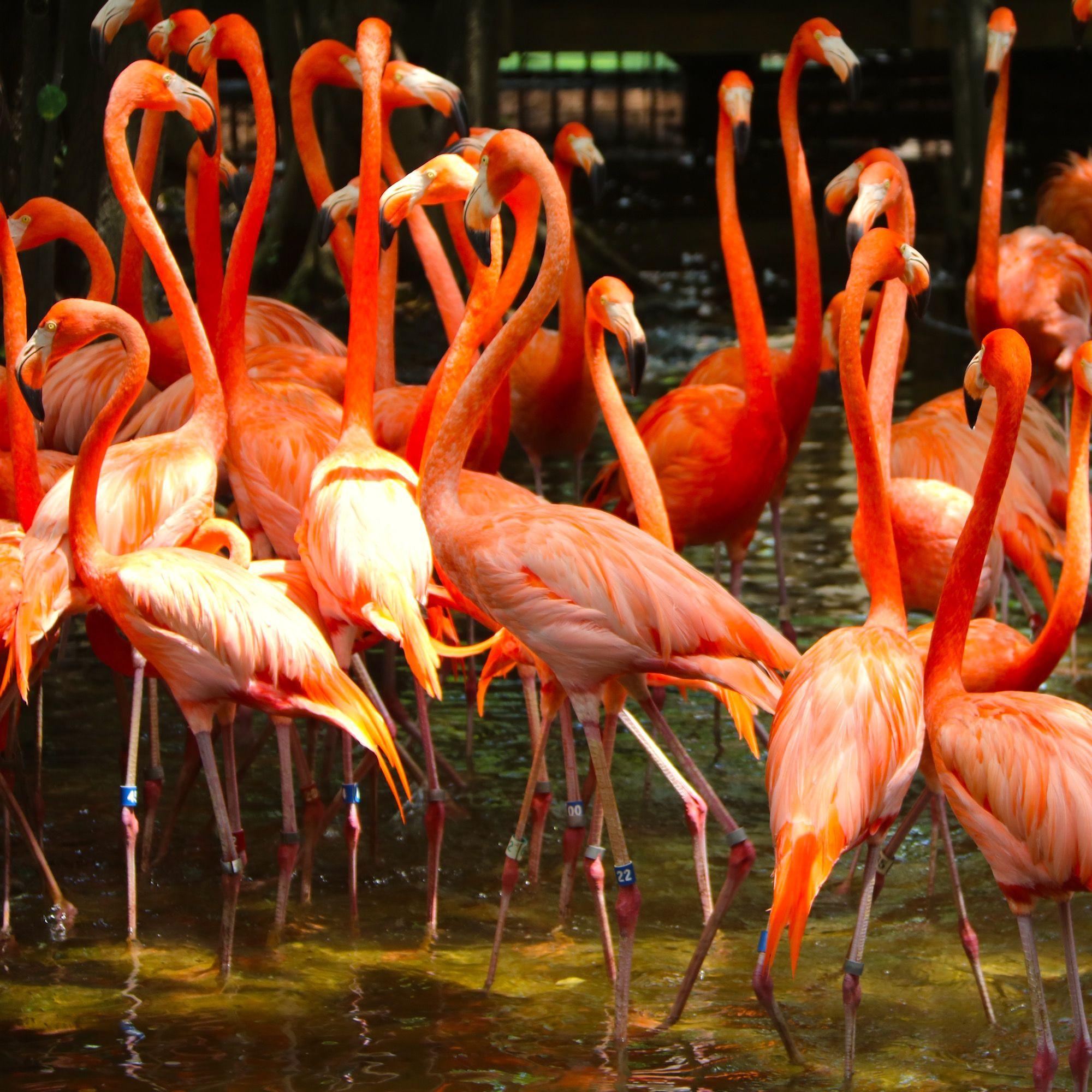 Flamingo Gardens In Miami