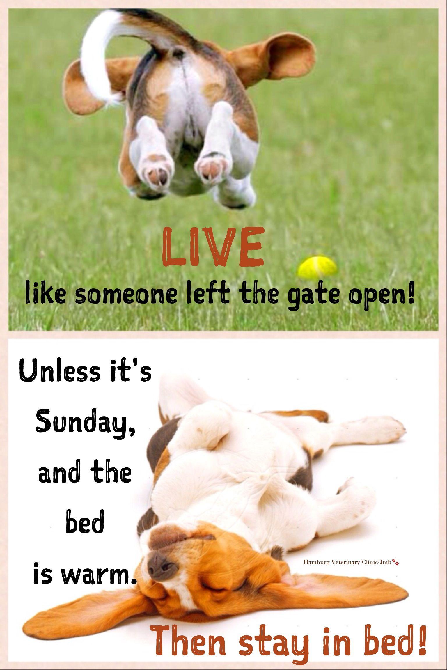 Sunday Humor Dog Funny Happiness Relax Enjoy Life Good Morning Have A Wonderful Relaxing Sunday Funny Dogs Sunday Humor Sunday Quotes Funny