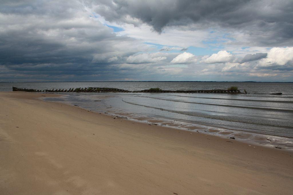 Delaware Bay Shipwrecks Woodland