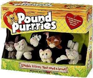 Pound Purries And Pound Puppies That Looks Like The Old Cat