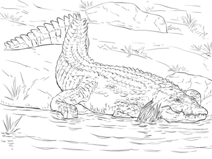 Free printable coloring page of a nile crocodile for adults | Animal ...
