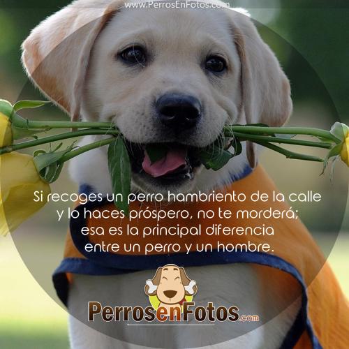 Si recoges a un perro hambriento y lo haces feliz, no te morderá. Esta es la principal diferencia entre un perro y las personas.