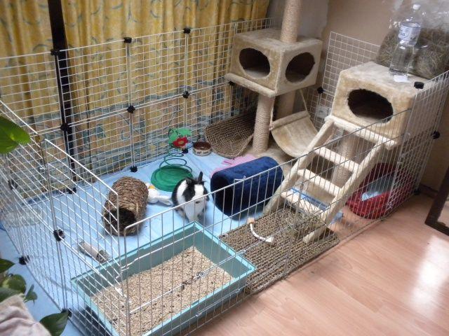 r sultat de recherche d 39 images pour ratelier lapin lapins ratelier et lapin. Black Bedroom Furniture Sets. Home Design Ideas