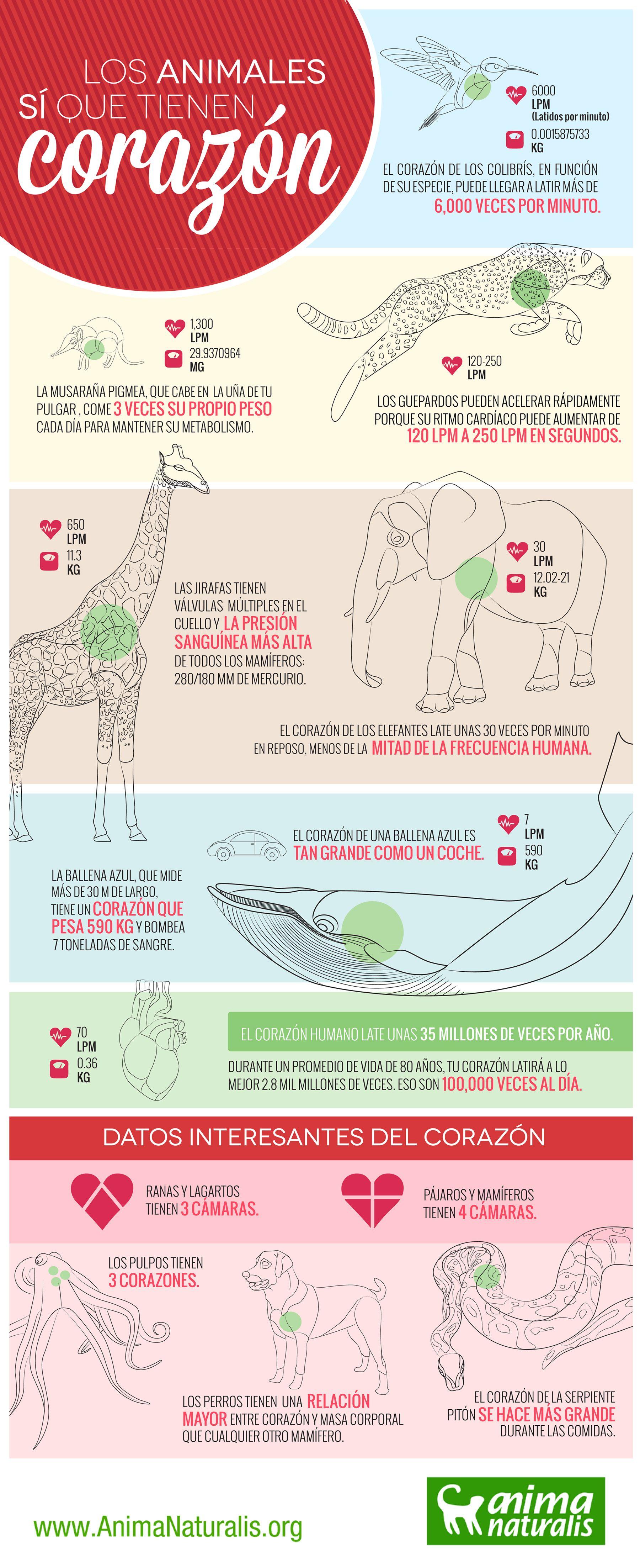 Algunos Animales Sí Que Tienen Corazón San Valentín Es El Día Tradicional Para Regalar Corazones Veam Bienestar Animal Animales Los Animales Tienen Derechos