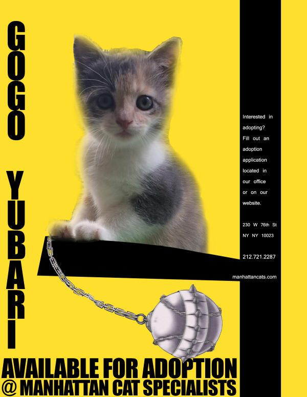 Meet Gogo Yubari This Little 5 Week Old Kitten Is A Ninja